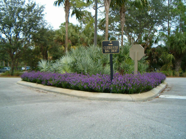 Gainesville Landscaping Plant Of The Month Angelonia