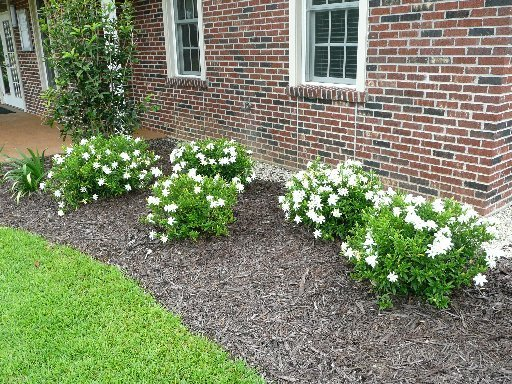 Gainesville Landscape Plant Of The Month Frost Proof