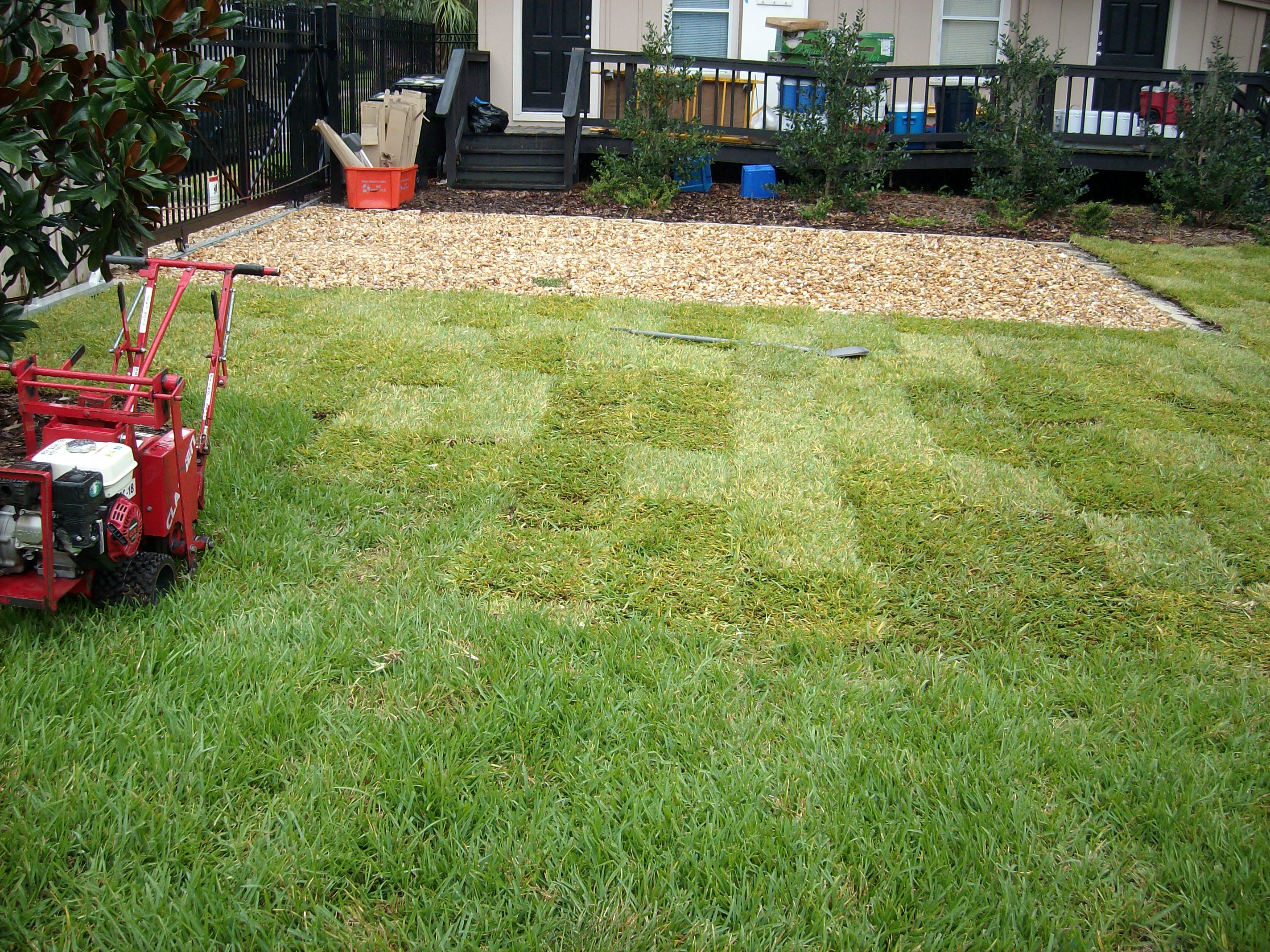 how professional gainesville sod installation works the masters