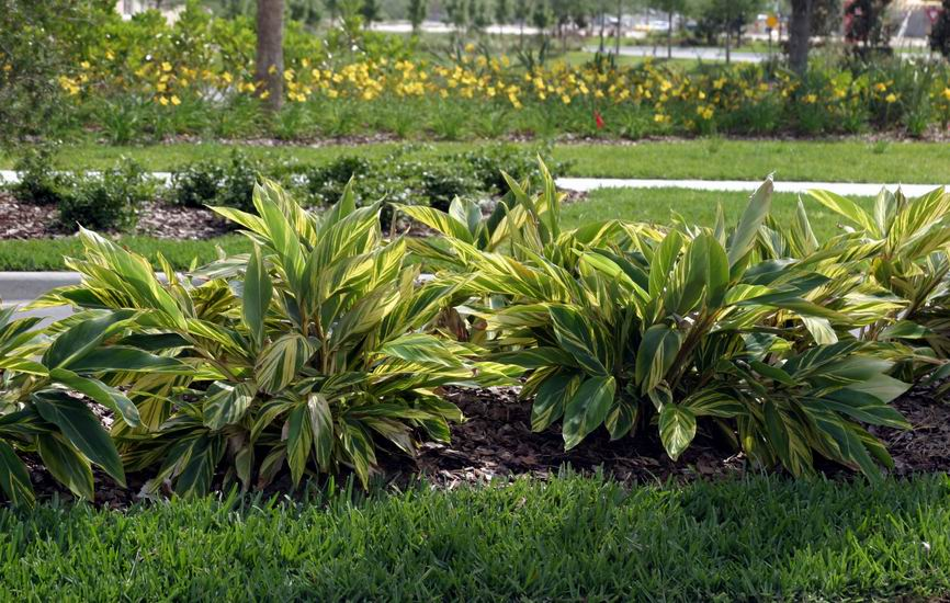 Tips To Create Tropical Gainesville Landscaping The
