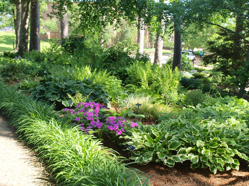 Ground Cover Plants For Sun Perennials Landscapes