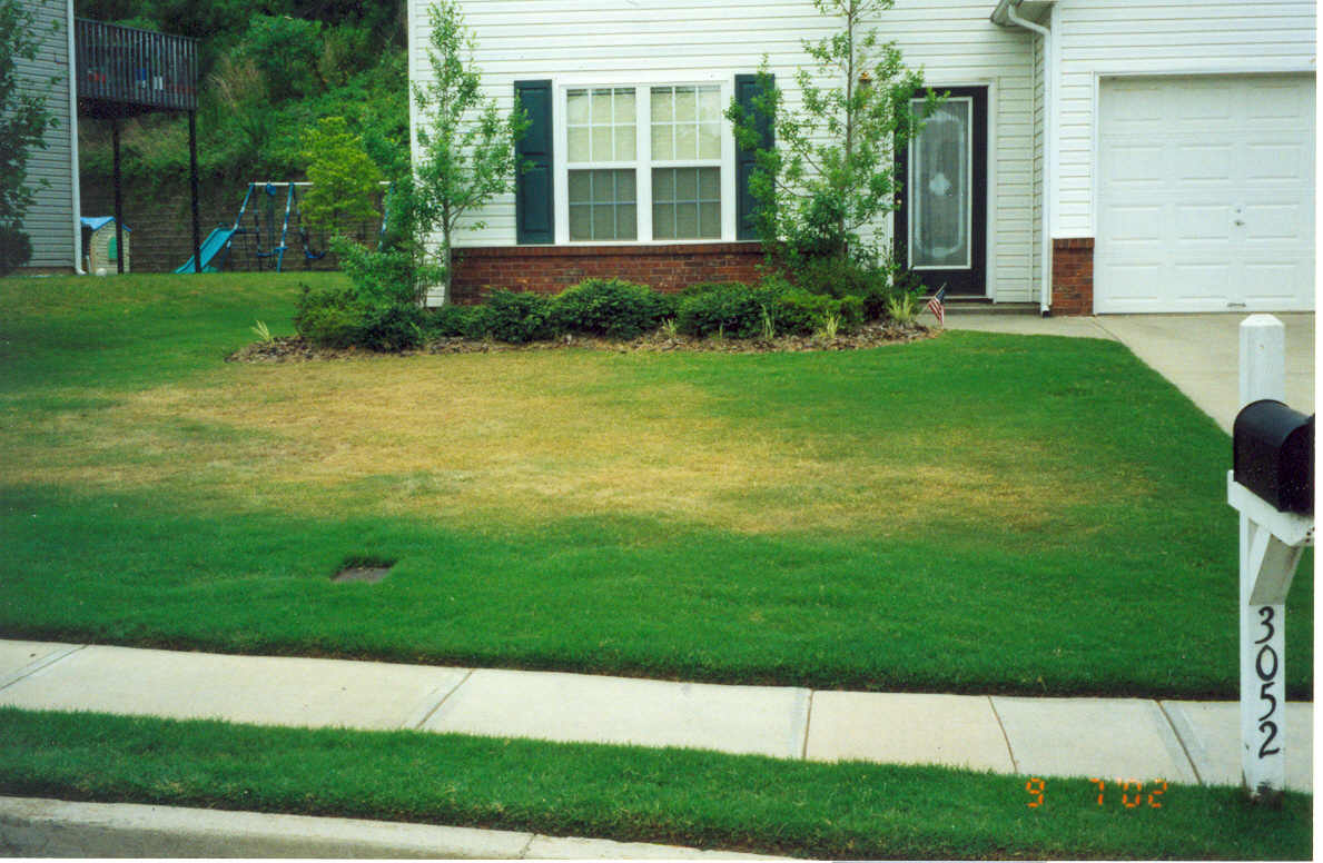 Quick Tip How Do I Get Brown Spots Out Of My Zoysia Lawn
