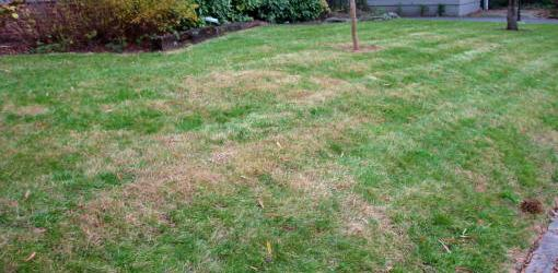 Quick Tip Why Does My Lawn Have Brown Spots This Summer