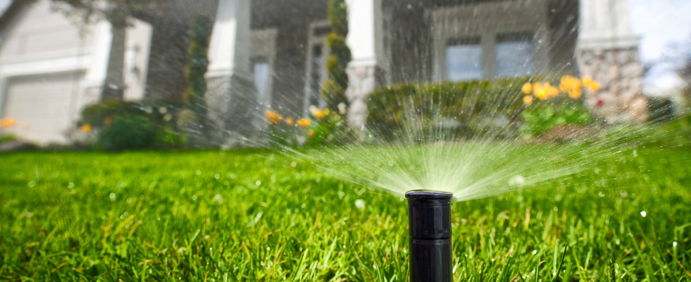 3 Basic Needs Of A Healthy Gainesville Lawn Water The