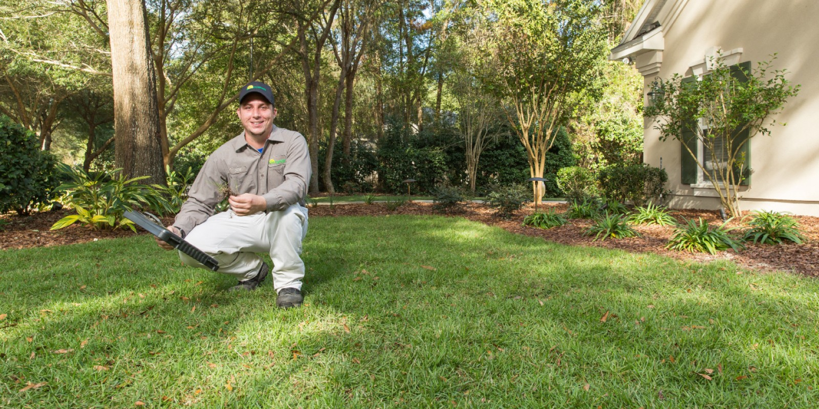 Lawn Damaging Insects The Masters Lawn Care