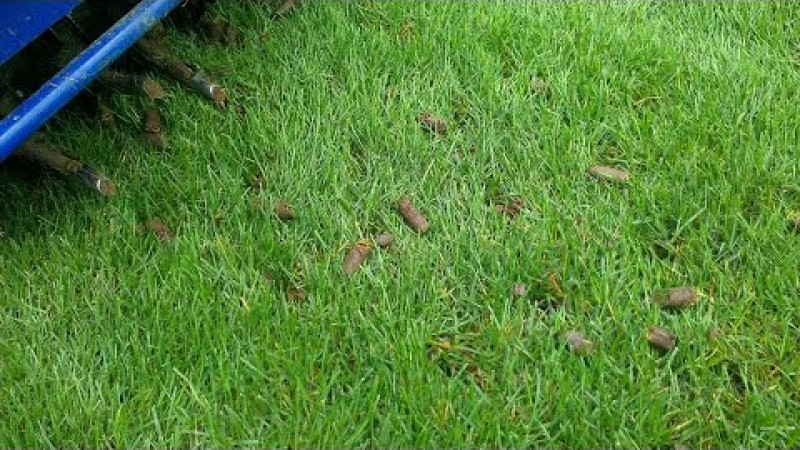 Embedded thumbnail for VLOG: 3 Quick Tips to Help Your Lawn Thrive this Spring