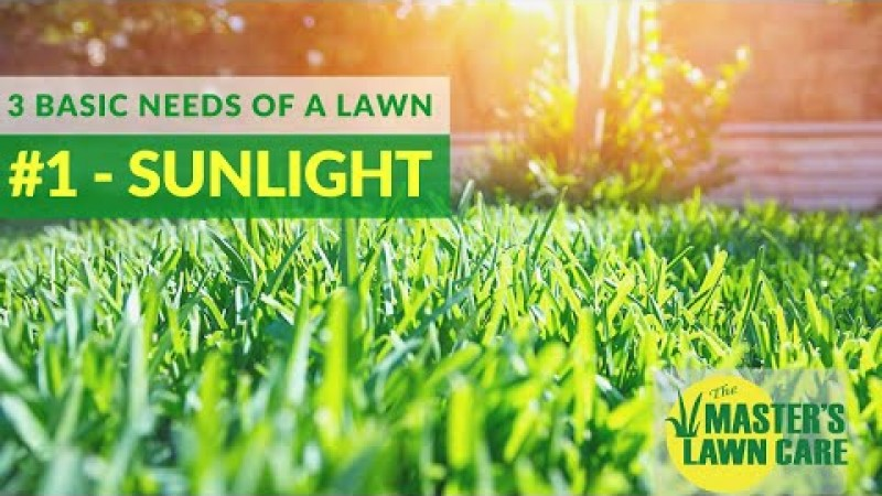 Embedded thumbnail for The #1 Basic Need of a Lawn?☀️ Sunlight ☀️