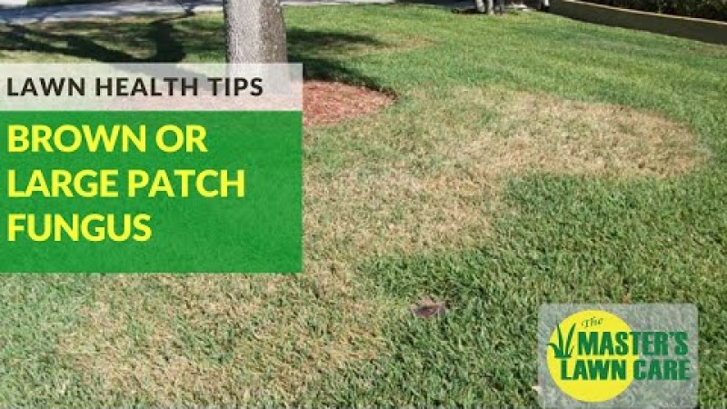 Embedded thumbnail for VLOG: How To Prevent Brown Patch Fungus in your Gainesville Lawn