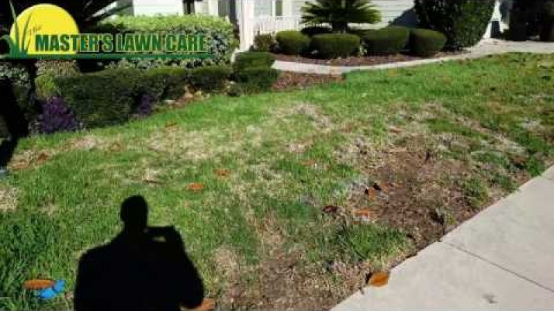 Embedded thumbnail for VIDEO: Recognizing Chinch bugs in your lawn