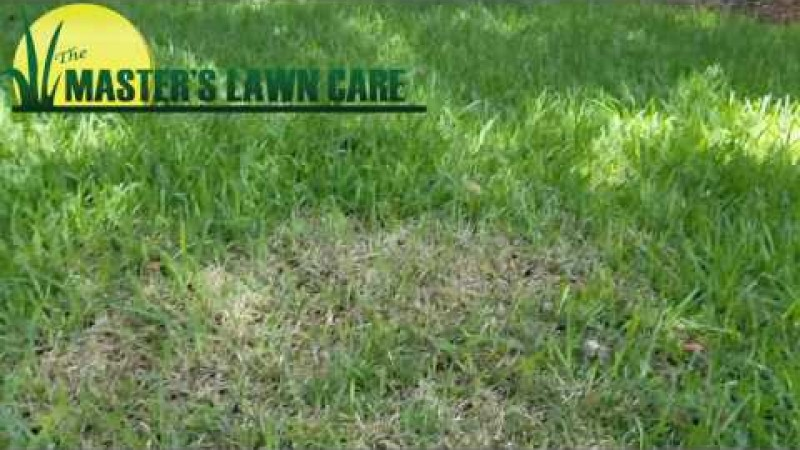 Embedded thumbnail for VIDEO: Why are moths in my Gainesville lawn?