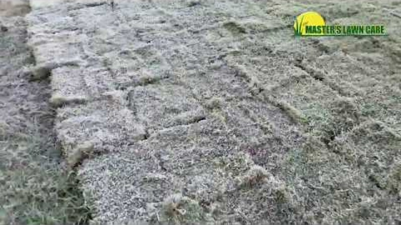 Embedded thumbnail for How to Avoid Frost Damage in Your Gainesville Lawn