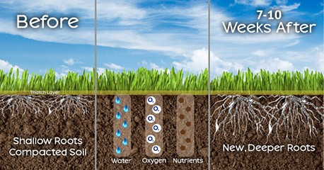 Gainesville grass aeration benefits