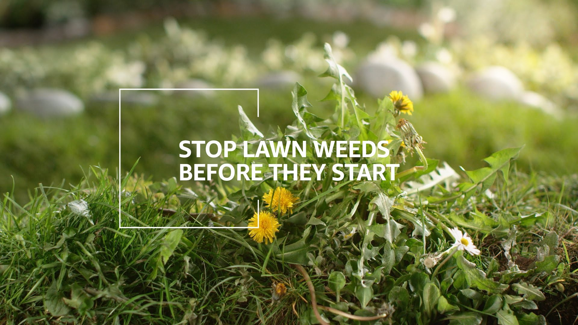 Stop Gainesville Lawn Weeds Before they Start
