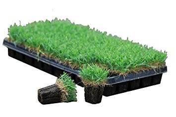 New Year New Lawn The Masters Lawn Care