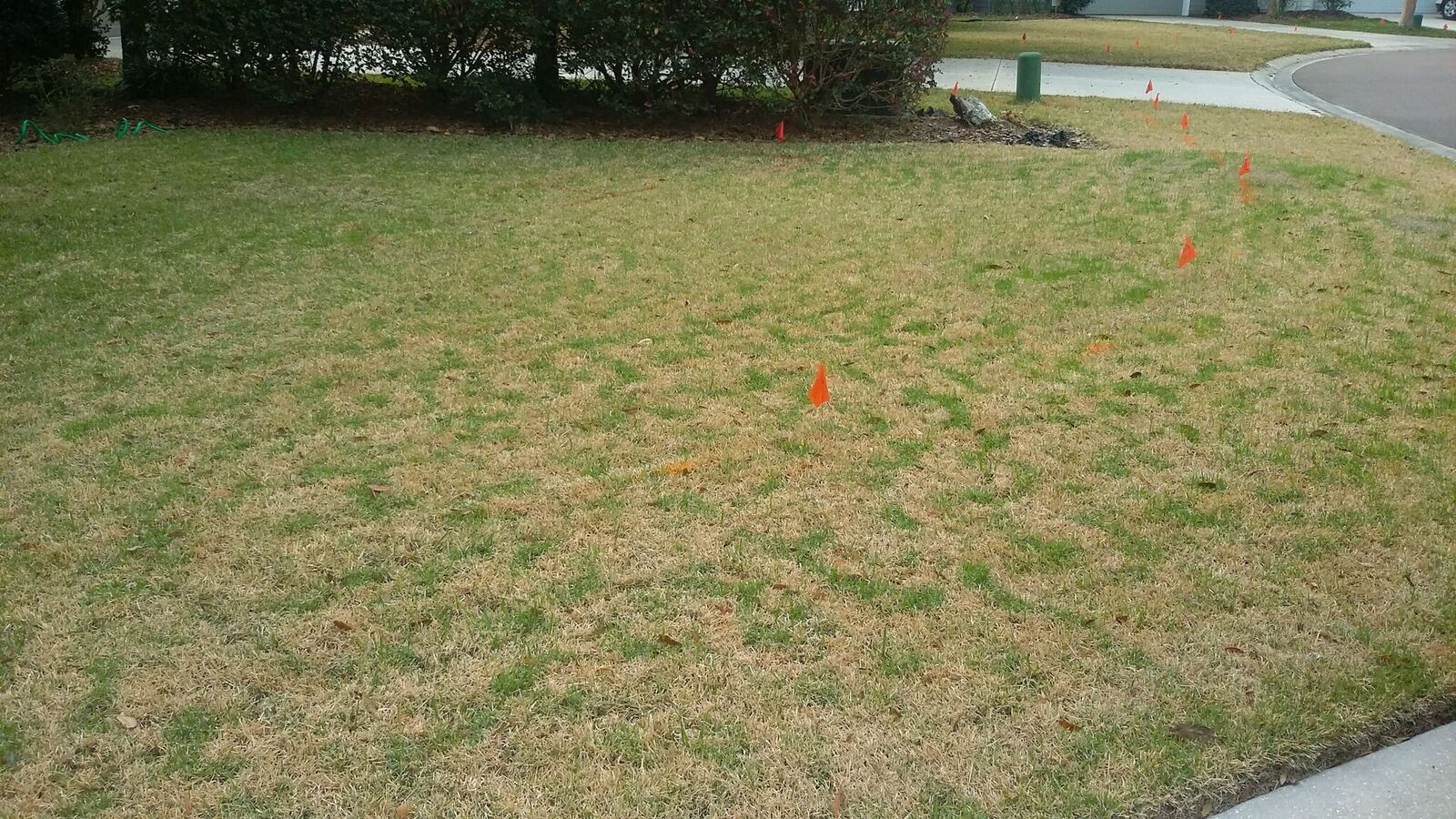Gainesville Zoysia Dormancy
