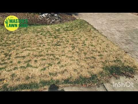 Embedded thumbnail for VLOG: Why does my Zoysia grass have tiger stripes?