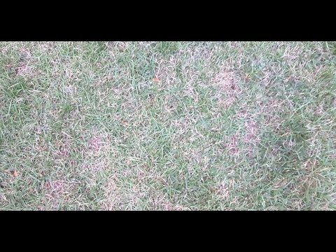 Embedded thumbnail for VLOG: Which is better - Zoysia or St. Augustine grass?