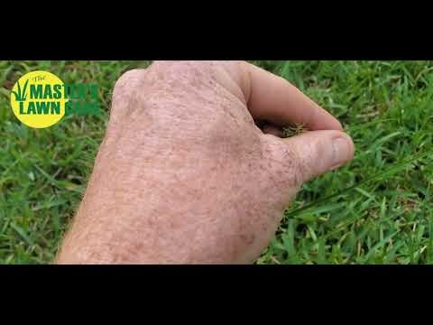 "Embedded thumbnail for How do I control green ""sandspurs"" in my lawn?"