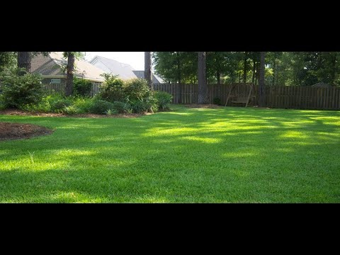 Embedded thumbnail for VLOG: Should I Seed, Plug, or Sod the Bare Spots in my Gainesville Lawn?