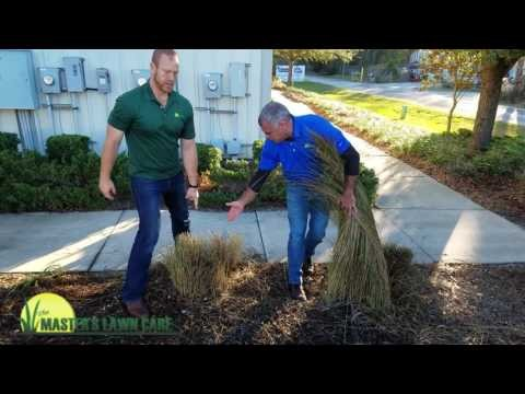 Embedded thumbnail for VIDEO: Pruning Back Muhly Grass