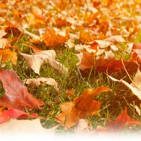 5 Gainesvillle Landscape Tips for Fall