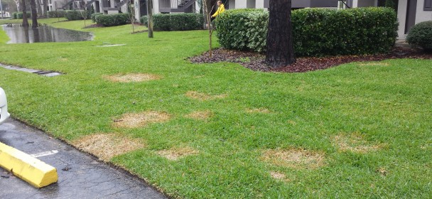 Watch Out For Fungus In Your Gainesville Lawn With All Of