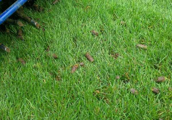 Lawn Maintenance The Masters Lawn Care