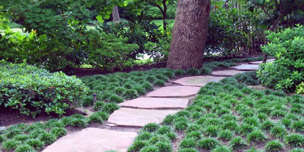 3 Alternatives To Grass In Your Gainesville Landscape The Masters Lawn Care