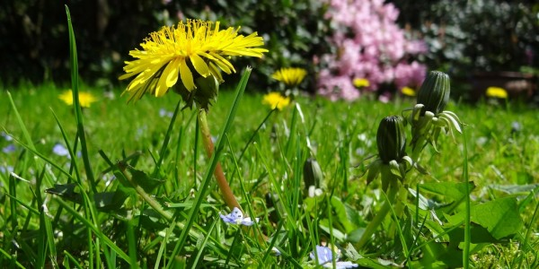 Why Is A Pre Emergent Lawn Lication Important For